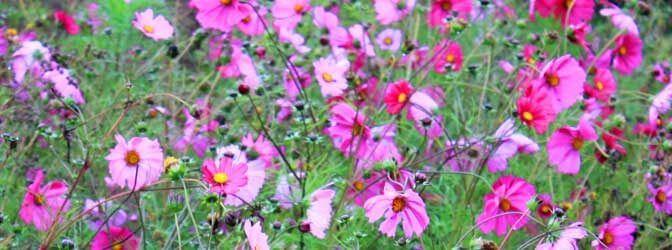 Украшение праздничного стола живыми цветами