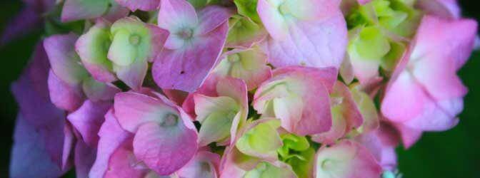 В какие вазы ставить цветы на праздничном столе