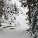 Игры для зимнего отдыха на природе